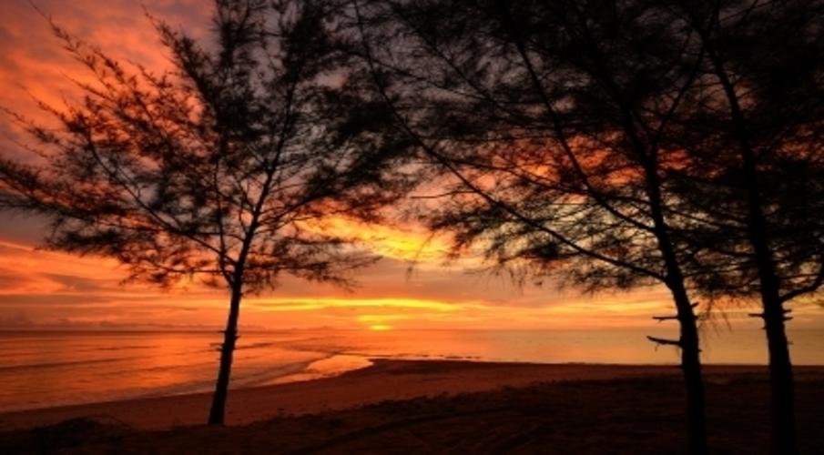 sunset, trees in sunset
