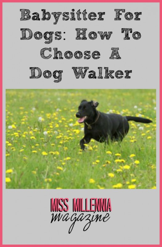 Babysitter For Dogs: How To Choose A Dog Walker