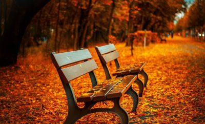 bench in the fall, leaves