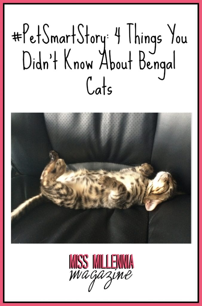 #PetSmartStory: 4 Things You Did Not Know About Bengal Cats