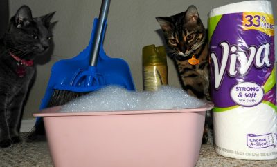 cats are cute, but are not allergy-free. Tips to get the allergens out of the house.