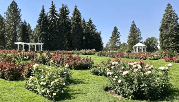 rose garden at manito park in spokane, washington